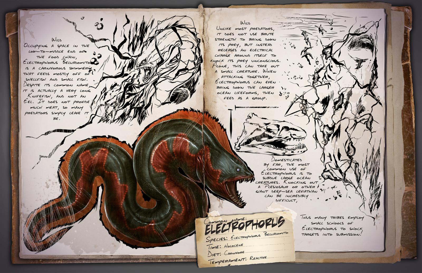 large.Electrophorus.jpg