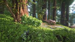 Redwood Biome