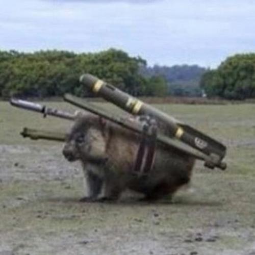 combat wombat.jpg