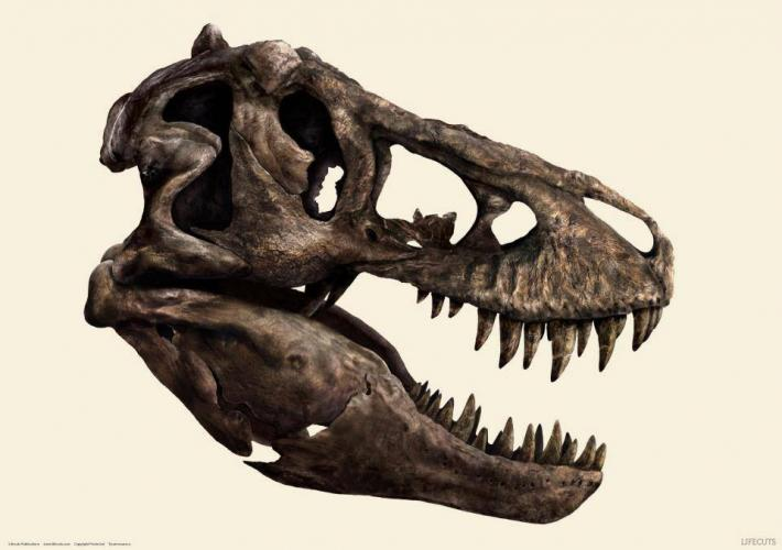 t_rex_skull_by_reebkram-d6ntwao.jpg