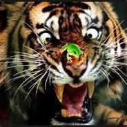 TigerJoel