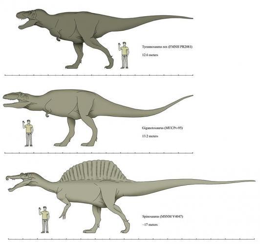 Giganotosaurus-Size.jpg